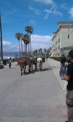 Mules on the Boardwalk from @codyyamick